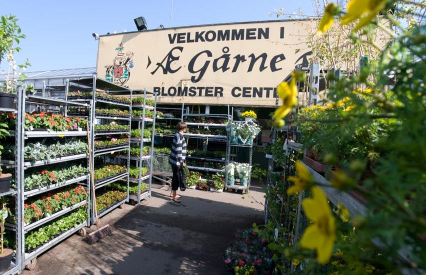 Gaarne Garden Centre woman and flowers
